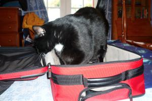 Our cat, Ricky, was happy to see us, and inspected our luggage as we unpacked.